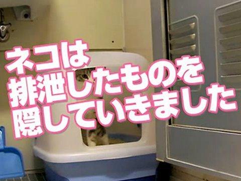 番外編 #06 「ネコは排泄したものを隠していきました」