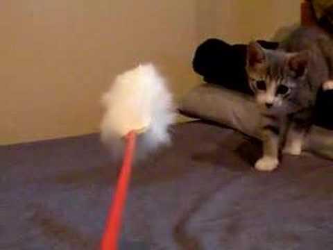 #10 「猫じゃらし目線」