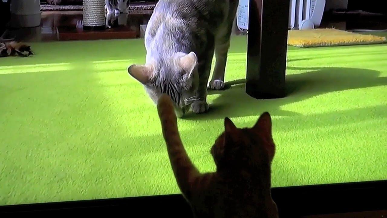 自分と戦うネコ