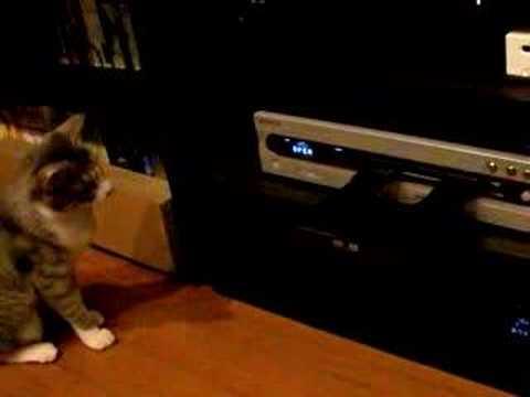 #52 「熟考猫」
