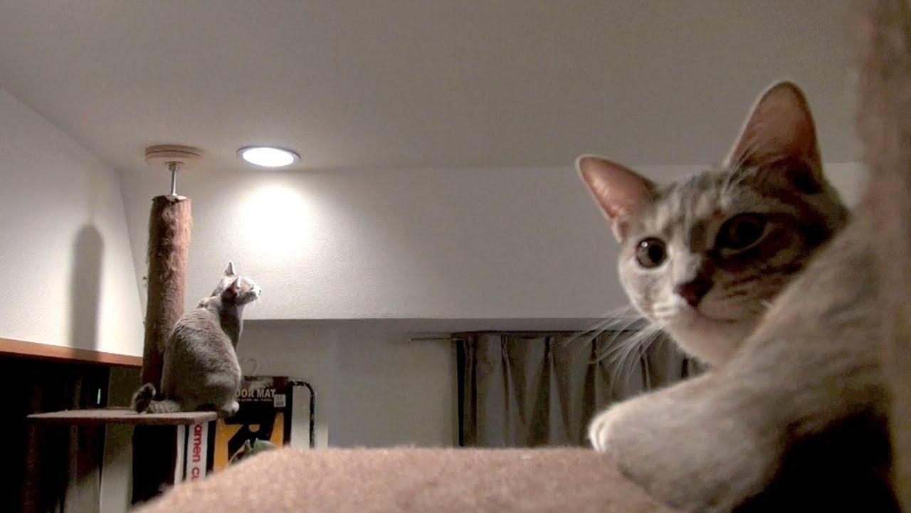 自宅警備ネコ