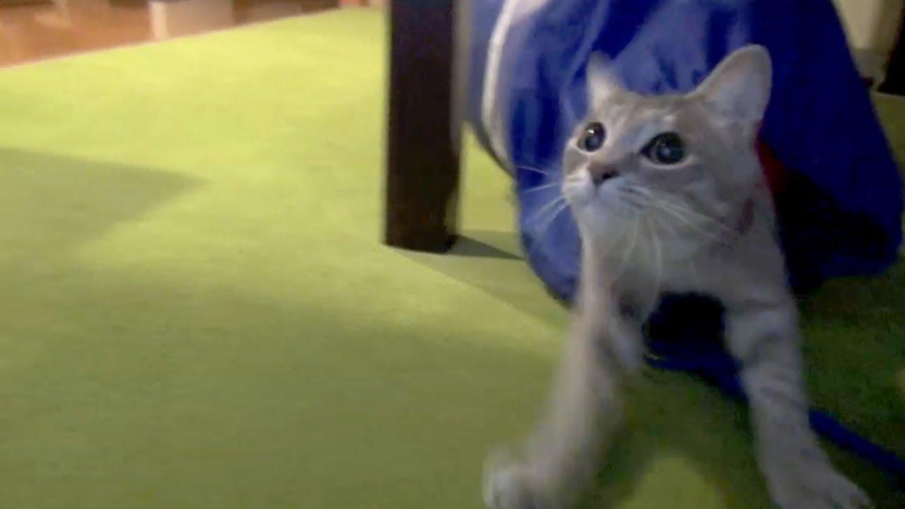 ネコ的キャッチボール