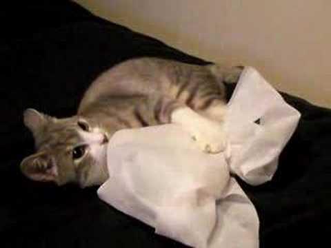 #78 「袋の猫」