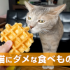 猫にダメな食べもの