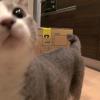 ネコと引越し・探索編