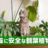 猫に安全な観葉植物