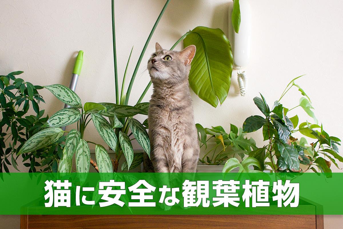 育て 猫 方 草