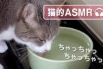 【猫的ASMR】 おいしい音