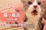 猫っ風呂 2019・秋 〜 奇跡のねこじゃすり 〜