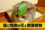 猫に危険な花と観葉植物
